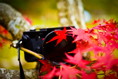 See you next life (moaan) Tags: life leica november autumn red color digital 50mm glow dof bokeh dr diary momiji summicron japanesemaple kobe farewell utata rokko glowing hue tinted 2010 m9 f20 tinged autumnaltints inlife leicasummicron50mmf20dr leicam9 diaryofnovember gettyimagesjapanq1 gettyimagesjapanq2