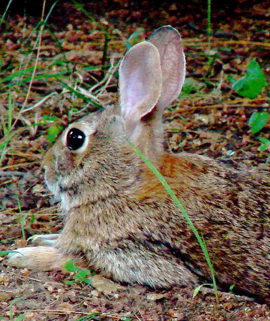 Bunny Profile