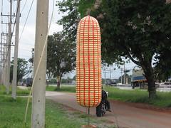 Big Sweet Corn @ THAILAND ข้าวโพดหวานไร่สุวรรณ