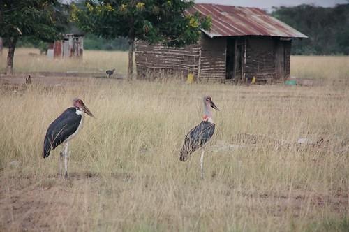 Uganda - QENP Rich Bird Life 6