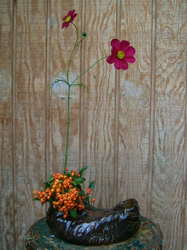 Cosmos and pyracantha berries