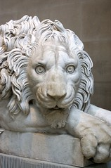 (Tom Jennings) Tags: sculpture house stone lion chatsworth