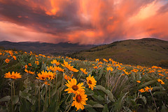 Spring Storm, Sunset (KPieper) Tags: sunset storm color rain washington winthrop cascades wildflowers balsamroot cs5 kpieper pieperphotographynet 5d2