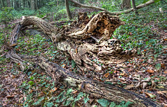 "De Slang in het Bos • <a style=""font-size:0.8em;"" href=""http://www.flickr.com/photos/45090765@N05/5107892922/"" target=""_blank"">View on Flickr</a>"