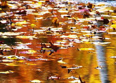Leaves in a reflected puddle -- Minnewaska State Park (Katy Silberger) Tags: fallleaves reflections fallfoliage shawangunks reflexions newpaltzny minnewaskastatepark midhudsonvalley nikond60 shawangunkridge the4elements colorphotoaward
