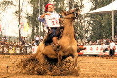 Faceira Calabassa (Eduardo Amorim) Tags: brazil horses horse southamerica brasil criollo caballo cheval caballos mare cavalos pferde cavalli cavallo cavalo gauchos pferd riograndedosul hest mares hevonen brsil chevaux gaucho gua guas  yegua amricadosul hst yeguas gacho  amriquedusud  gachos  sudamrica suramrica amricadelsur  sdamerika esteio crioulo caballoscriollos criollos   americadelsud freiodeouro  crioulos cavalocrioulo americameridionale caballocriollo eduardoamorim cavaloscrioulos iayayam yamaiay guacrioula yeguacriolla guascrioulas yeguascriollas freiodeouro2010