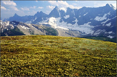 Fields of cheer (storm light) Tags: flowers canada mountains film print bc heather meadows alpine heath scanned glaciers rockymountains rockwall yellowgreen kodak400 canadianrockies kootenaynationalpark canonrebelg yellowmountainheather pglandulaflora