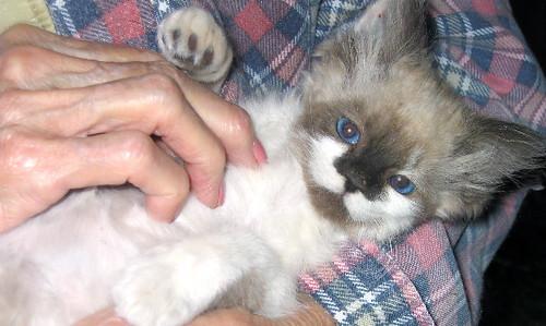 ItsyBitsy- cute kitten