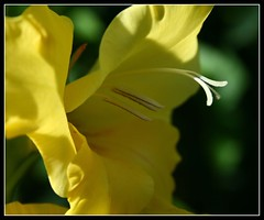 (andrewlee1967) Tags: uk england flower naturesfinest andrewlee mywinners canon400d andrewlee1967 focusman5