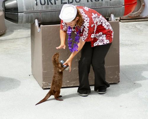 Hospitable Otter