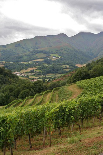 Pays Basques vineyards.jpg