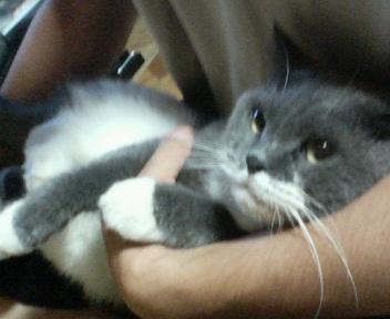 くつした猫