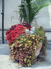 biltmore planter