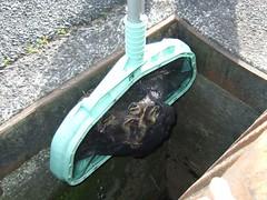 duck rescue 5