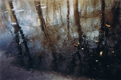 berlino (annamorosini) Tags: anna alberi lago riflessi ghiaccio berlino morosini