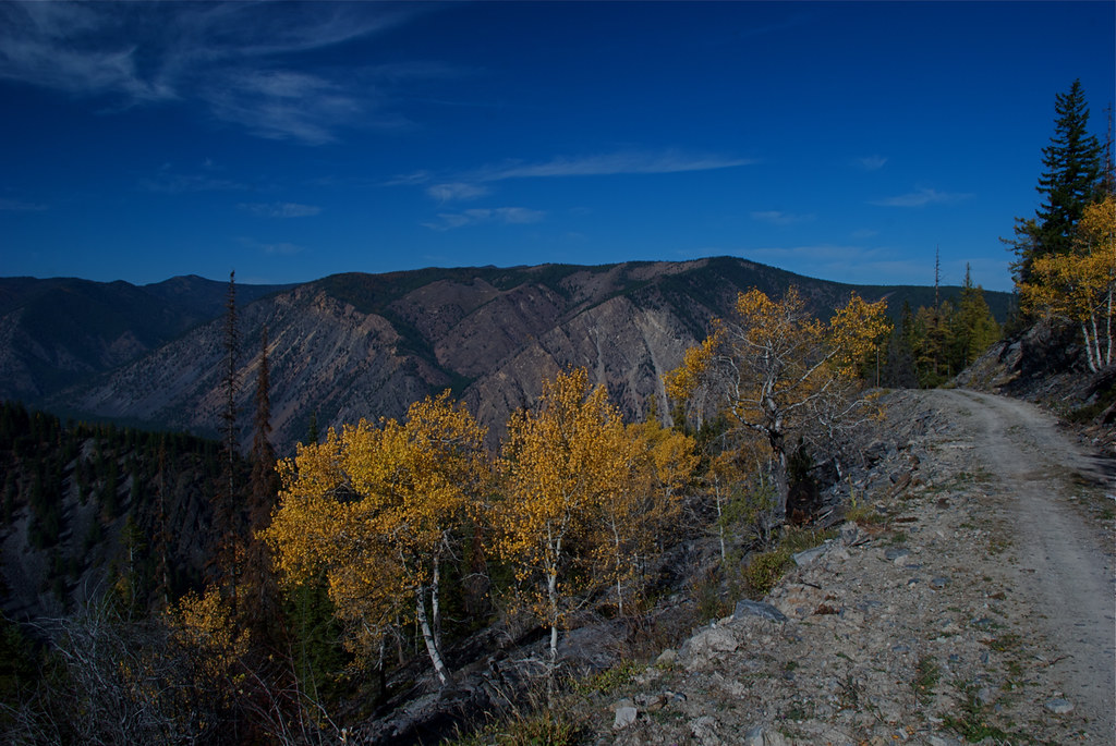 Aspens up toward Mexico Saddle