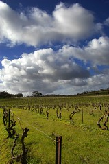 The Church Vineyard (erth) Tags: blue sky church nature clouds landscape outdoors vines wine pentax cloudy hill vine australia vineyards valley grapes aussie southaustralia grape barossa rolling erth seppeltsfield k100d