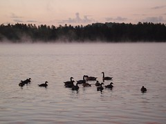 Sunrise Geese - by melanieburger
