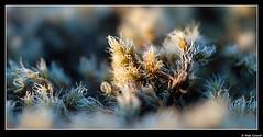 moss (Niels Giroud) Tags: autumn sunset red nature colors landscape iceland moss nikon d200 thingvellir