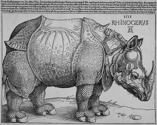 durer rhino.jpg