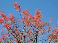 Ponteiros (Beijs) Tags: rvore galhos ponteiros