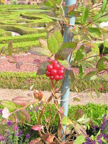 Gardens at Het Loo (4)