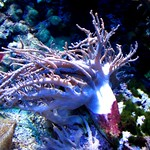 Aquarium Pyramid - Moody Gardens thumbnail