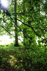 Sunshine Came Softly (annicariad) Tags: wales cymru wfc annicariad welshflickrcymru