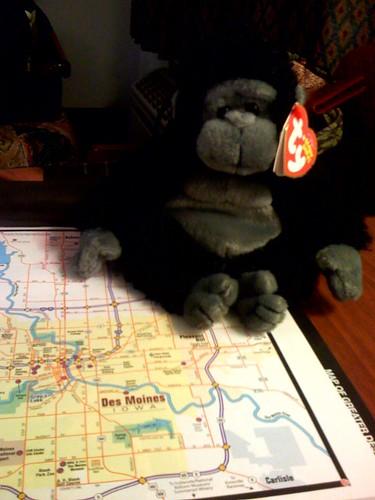 Tumba Monkey in Des Moines