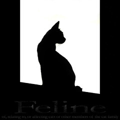 Feline (Yorick...) Tags: white black silhouette contrast cat feline shape dictionary
