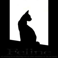 Feline (Yorick...) Tags: white black silhouette contrast cat feline shape dictionary