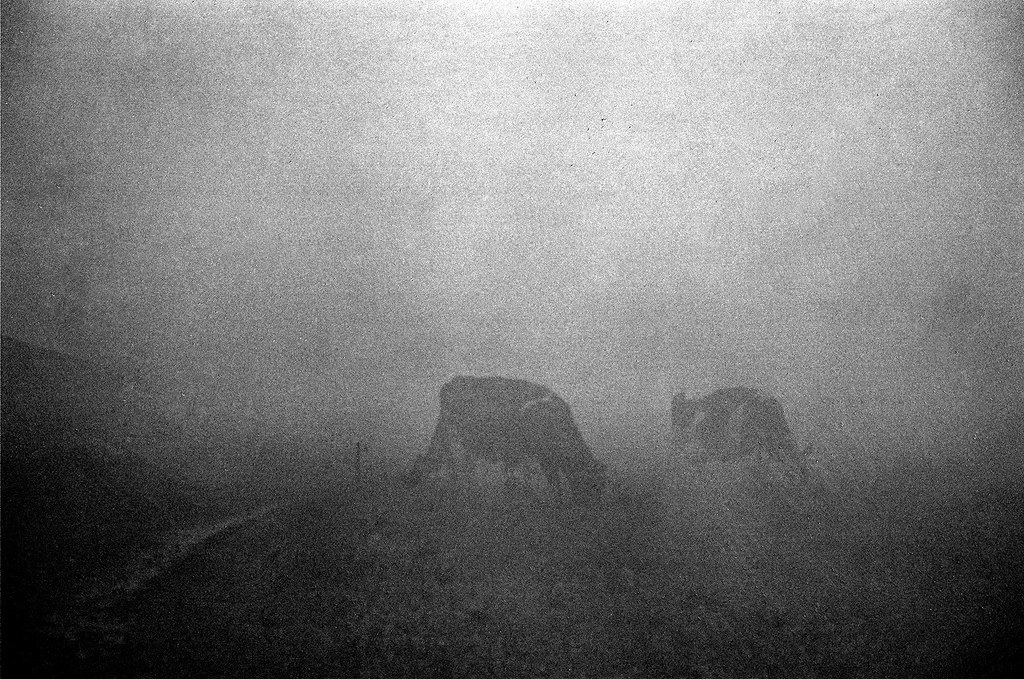 Mists #00270005