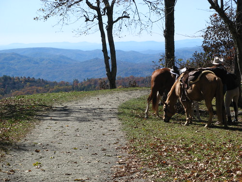 Horses along the trail
