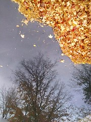 leaves falling off the tree