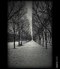 Palais Royal (CARLORICCI) Tags: bw paris france garden nikon jardin carlo fullframe fx palaisroyal d700 carl