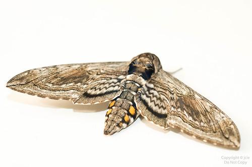 Moth Monday