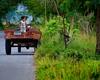 Kuliglig (8154) (TheHouseKeeper) Tags: field rural children kid philippines transport bata launion mateo province pinoy utilityvehicle farmscene thehousekeeper handtractor kuliglig bacnotan larawangpinoy georgemateo