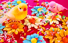 Tweet Tooth (boopsie.daisy) Tags: flowers colors beautiful birds daisies rainbow mess pretty candy vibrant sugar sprinkles birdies blueribbonwinner wowiekazowie colourartaward