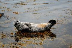 La foca desnuda
