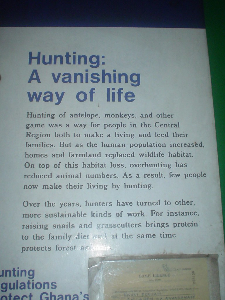 As my colleague Chris Lovell points out, hunting is not so much a way of life as a way of gaining sustenance.  Hunters in Ghana have become farmers of bushmeat, but whether this change is truly more sustainable is a dubious claim.