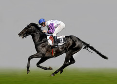 number 9 (Dan65) Tags: horse black racetrack race free run racing explore jockey rider racecourse racehorse 248 canter equine gallop diamondclassphotographer hawaalrayyanfav