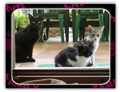 Cute Family (aunqtunolosepas) Tags: door family pet cats pets cute familia cat hall puerta kitten phone bea k750i sweet ericsson sony sonyericsson movil kitty kittens gatos cutie gato kitties entrada gata felinos felino cachorros lovely cuteness gatitos mascota mascotas phoneshot cachorritos camaramovil impressedbeauty aunqtunolosepas thebiggestgroupwithonlycats thebiggestgroupwithallkindofanimals
