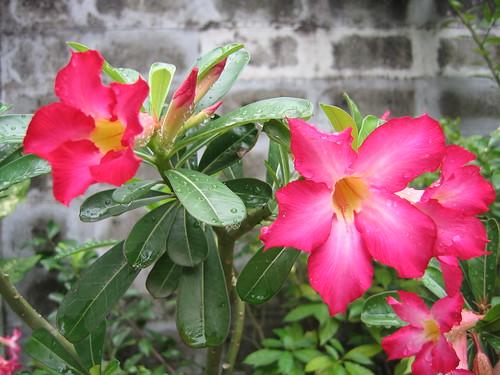 熱帶的花特別豔麗