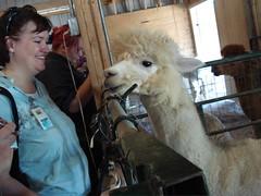 Valerie & Alpaca @ Yarn School 2007
