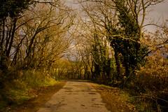 (marcos rv) Tags: road trees espaa spain strada arboles camino carretera abril galicia galiza estrada april aprile spagna 2010 ourense orense galizia limia sarreaus perrelos