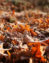 autumn colors (moniverse) Tags: justcropped