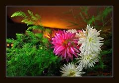 """BOUQUET (Jordi TROGUET (Thanks for 1,923,800+views)) Tags: flowers flores verde blanco colors fleurs nikon searchthebest couleurs blanc paysages """" verd flors jtr flowerscolors clores mywinners platinumphoto d700 nikond700 theperfectphotographer amiamoci troguet jorditroguet spiritofphotography awesomeblossoms fleursetpaysages abokehoflight ringexcellence lovelymotherearth"""""""