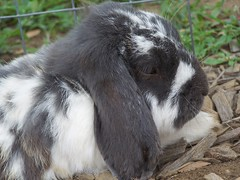 Bunny II (Hiker Man Photography) Tags: animal mammal creatures warmblooded donrivette donaldrivette
