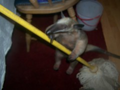 Stewie helps with mopping