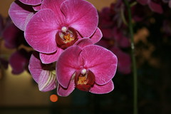 More Orchids @ HK airport
